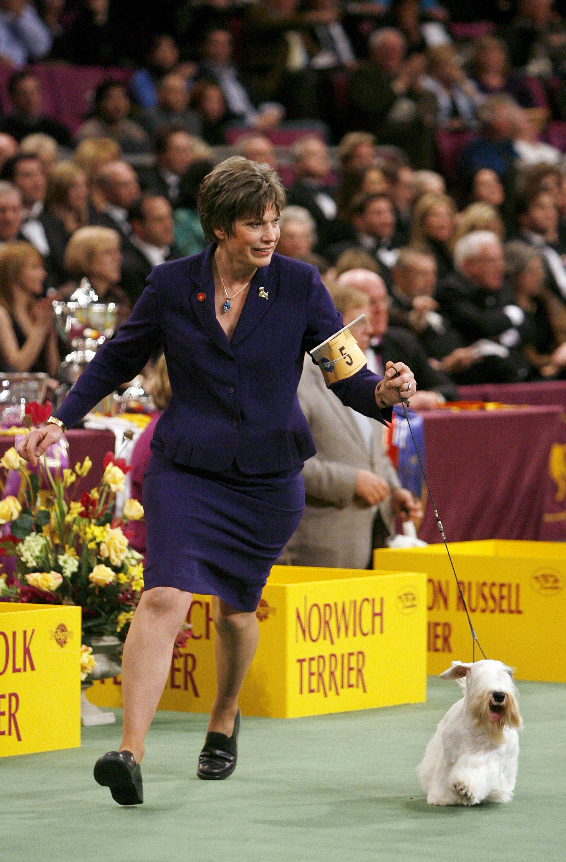 Westminster Dog Show Junior Showmanship