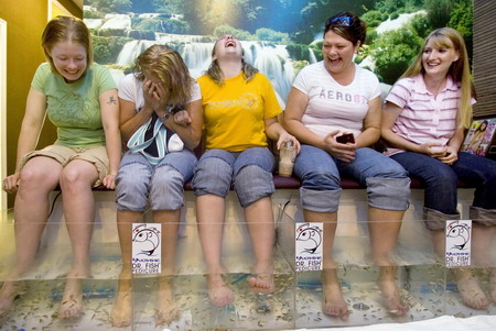 Little mouths add up to great pedicure for Fish pedicure utah