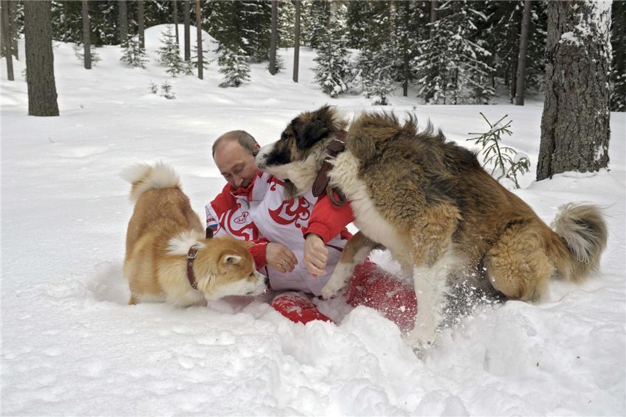 Vladimir Putin Dog Buffy Putin plays with dogs ...