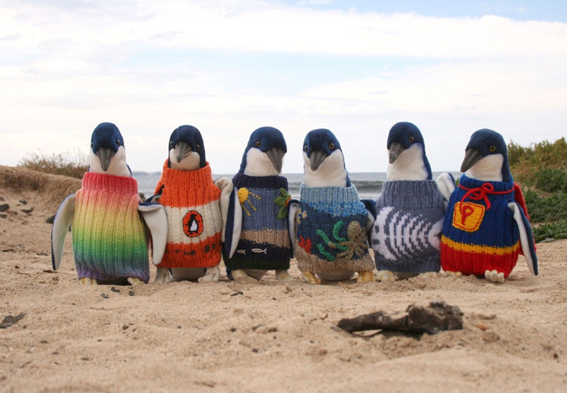 Knitting Websites Australia : Knit for nature chinadaily
