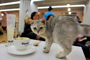 Pop-up cat cafe opens in New York