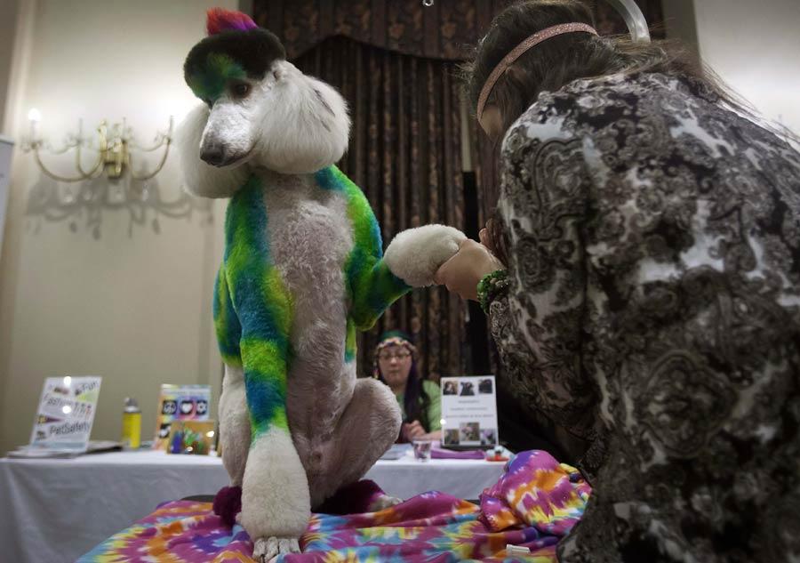 Pet models shine in New York Fashion Week