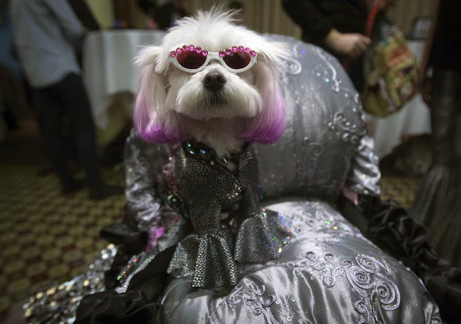 Pet models shine in New York Fashion Week