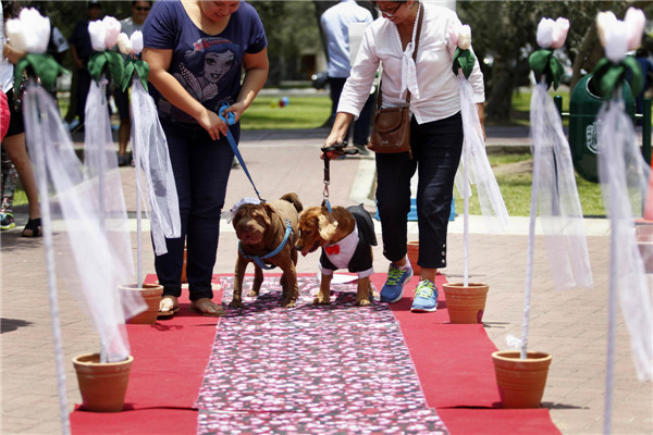 Pets wedding held in Lima