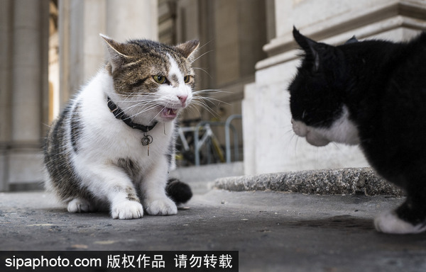 Cat fight world.com
