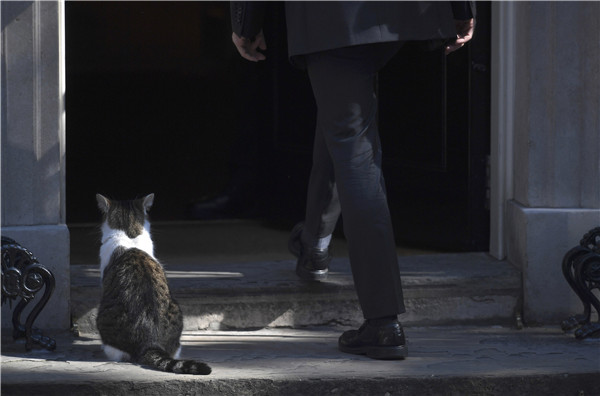 b53bd87e89a Downing Street cat fight: Larry vs Palmerston[2]- Chinadaily.com.cn