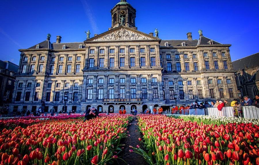 tulipe amsterdam 2017