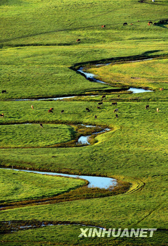 壁纸 草原 风景 山水 桌面 343_500 竖版 竖屏 手机