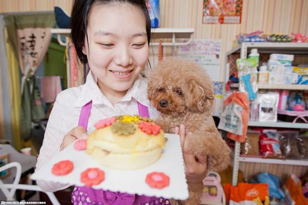 Superb Get A Birthday Cake For Your Pets 1 Chinadaily Com Cn Funny Birthday Cards Online Ioscodamsfinfo