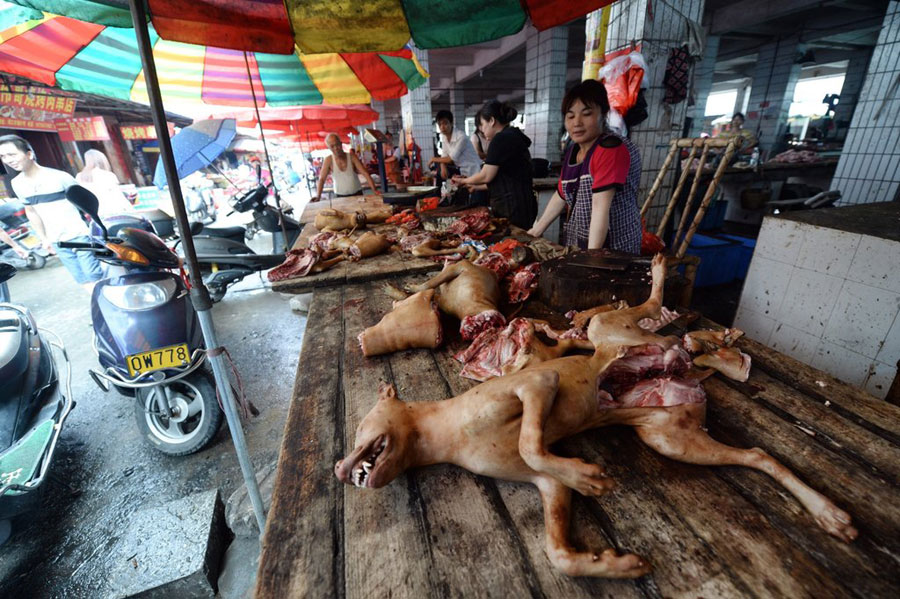 Fur flies in Yulin over dog meat festival[5]- Chinadaily.com.cn