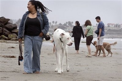San Diego Great Dane named world's tallest dog