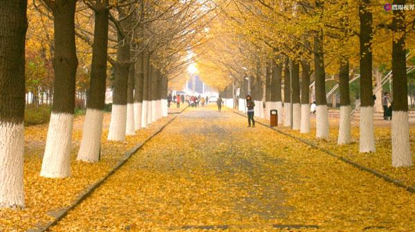 Dandong S Beautiful Scenery In Autumn 1 Chinadaily Com Cn