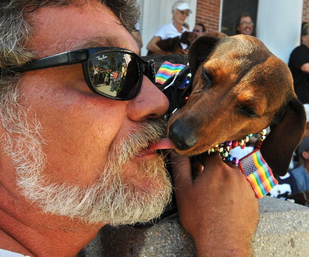 Canines march on dachshund walk event