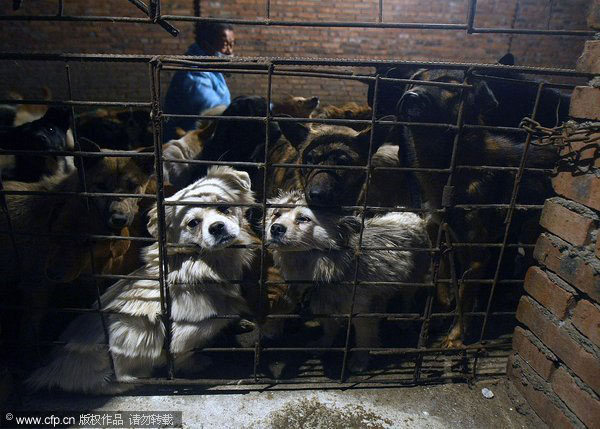 205 dogs saved from slaughterhouse|China|chinadaily.com.cn - photo#14