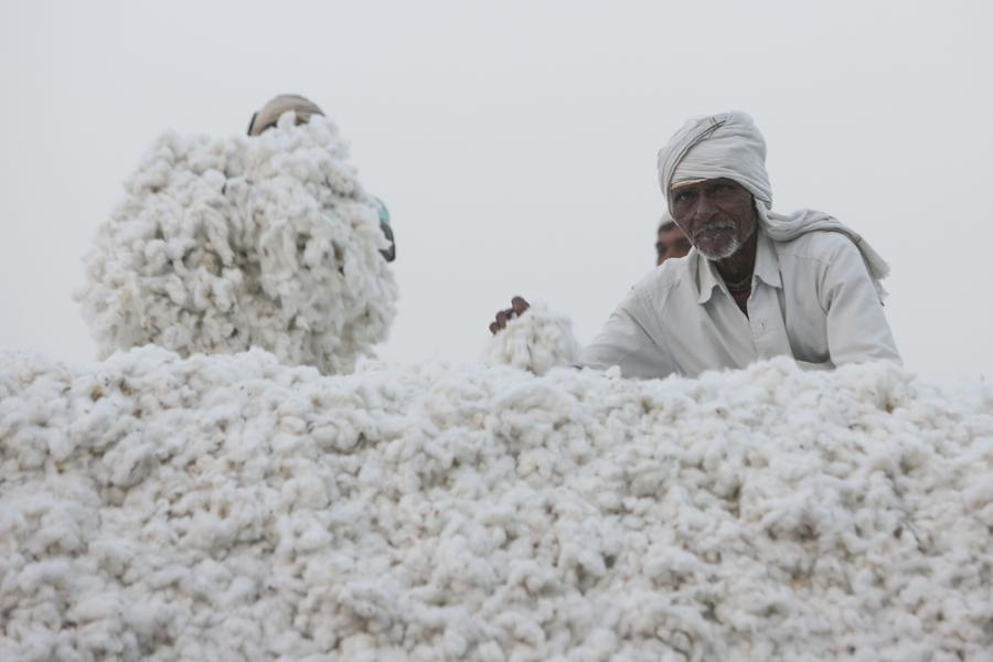 history of cotton in india essay Read this article to learn about industrial development in india demand for indian cotton goods in opened a new phase in india's industrial history.